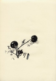 cherrytomaten-2005-kopie.jpg