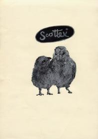 scottex-2005-kopie.jpg