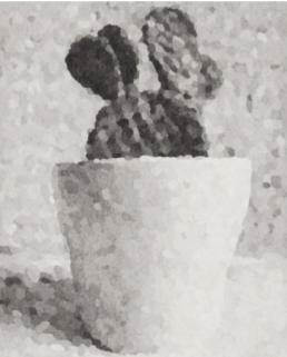 henrik jacob kaktus 2012